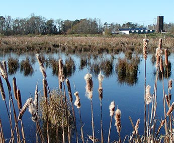 Impacts of wetland restoration on land values