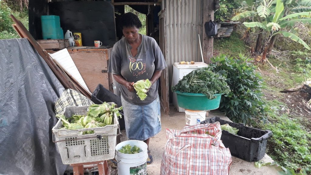 Image 1: A farmer washes and bags her lettuce and kale for delivery to a grocery store in town. 2018. Photo: Samantha King.