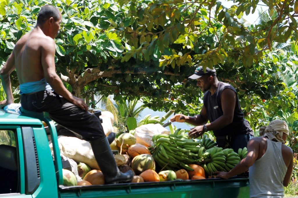 Image 4: Some farmers supplement their livelihoods by working as informal intermediaries, collecting produce from small farmers in the hinterlands and transporting it to the capital to sell. 2014. Photo: Samantha King.