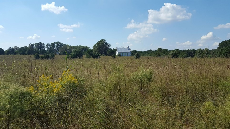 A field, with Oaky Grove Church in the distance, at Walnut Hill Farm. Photo: Triangle Land Conservancy